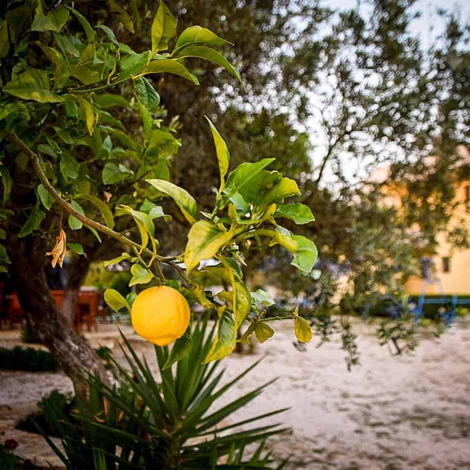 Albania - Ksamil - Lemon Tree