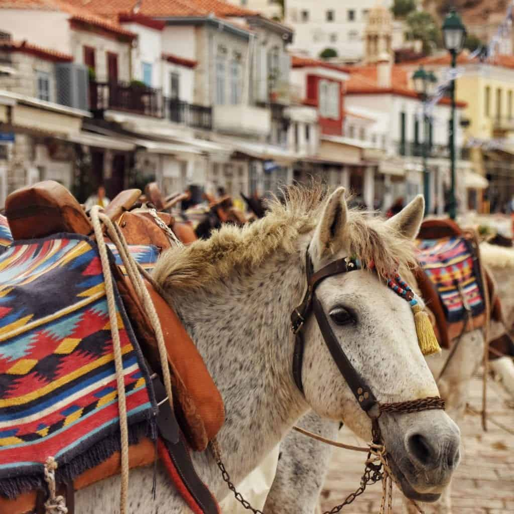 Greece - Hydra - Horse