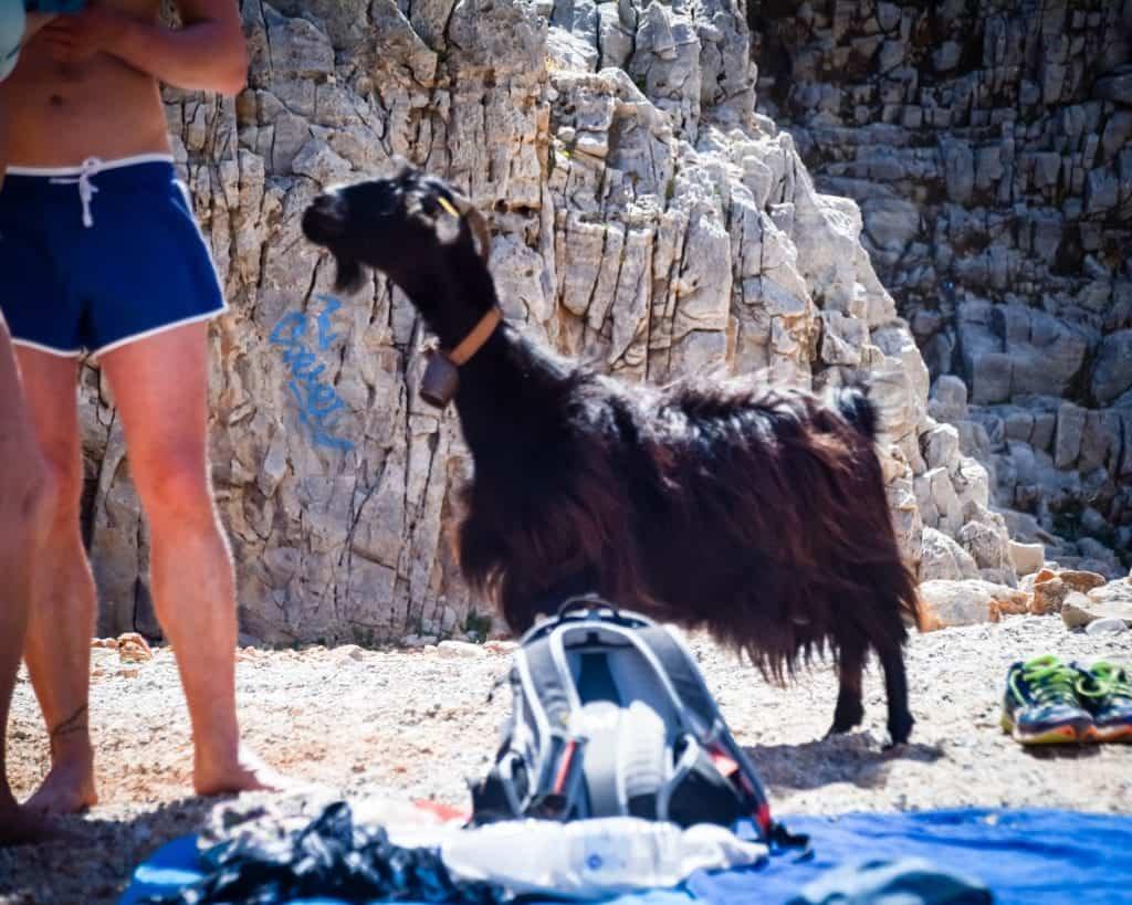 Greece - Crete - Seitan Limania Goat
