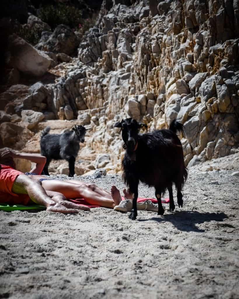 Greece - Crete - Seitan Limania Baby Goat and Mama Goat