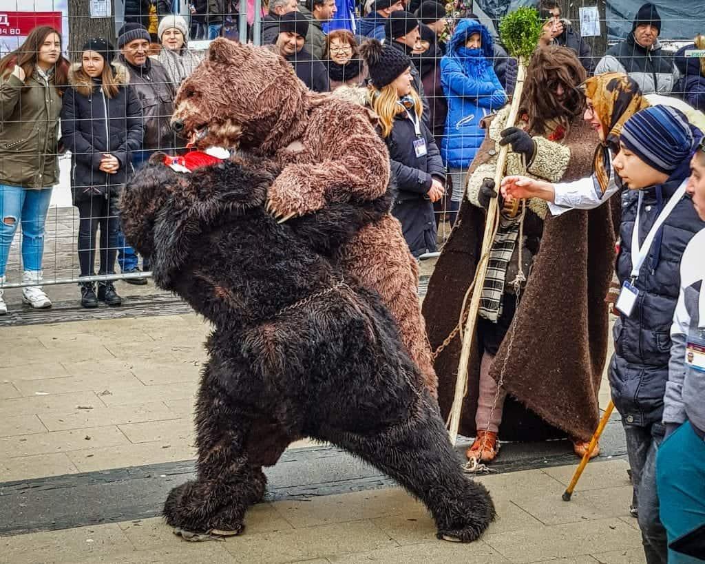 Bulgaria - Pernik - Fighting Bears