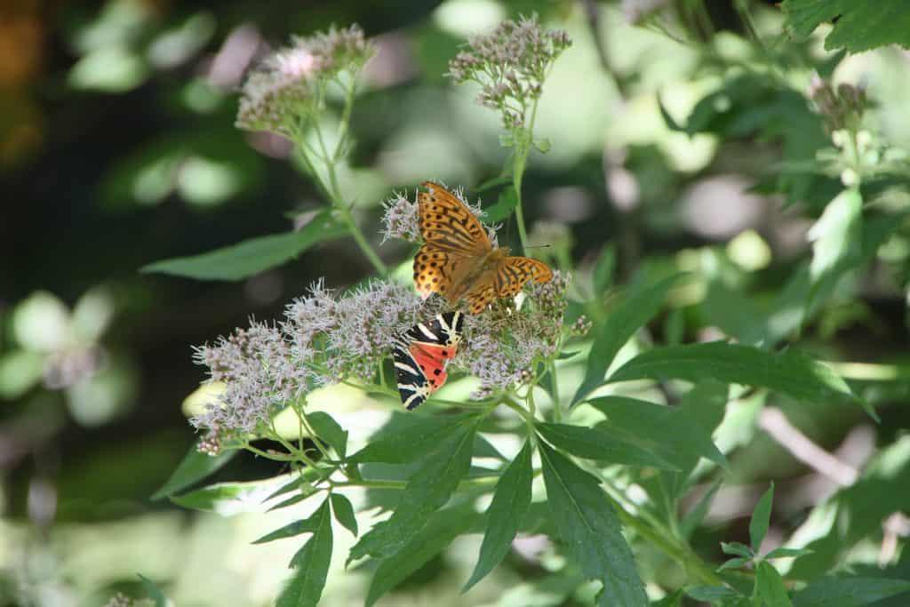 Greece - Rhodes - Valley of the Butterflies - Pixabay