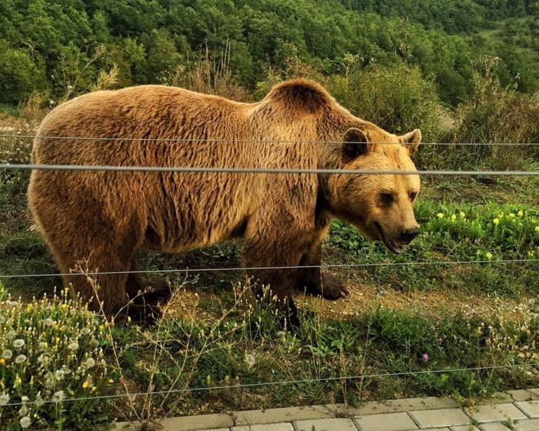 Kosovo - Bear Sanctuary - Bear