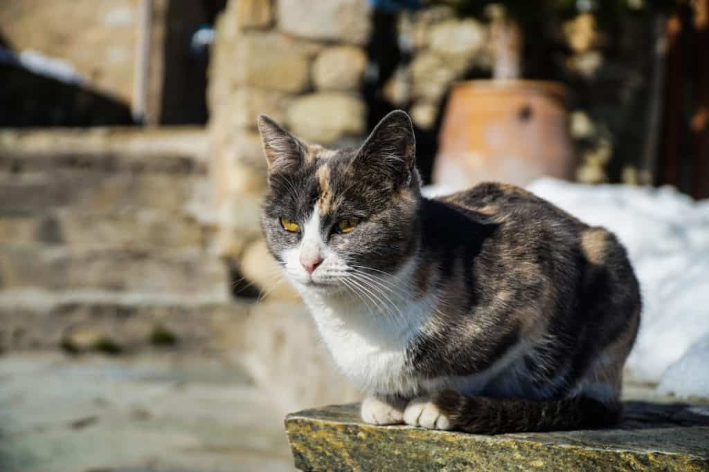 Greece - Meteora - Monastery Winter Cat