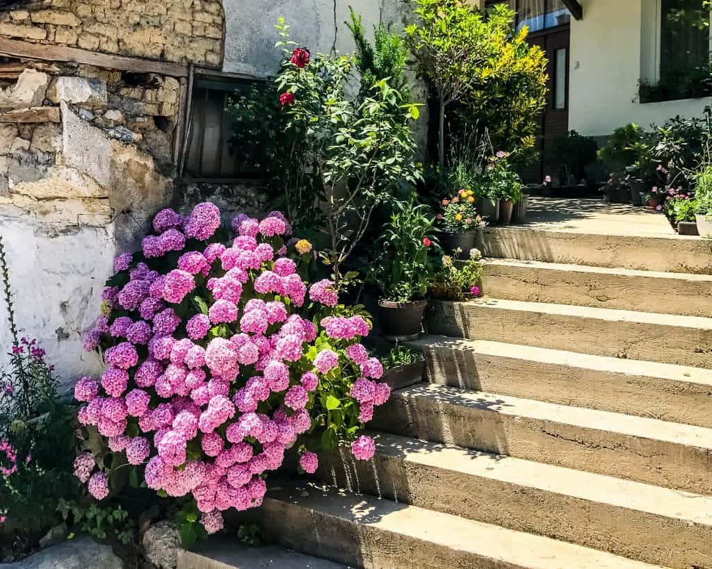 Macedonia - Lake Ohrid - Flowers