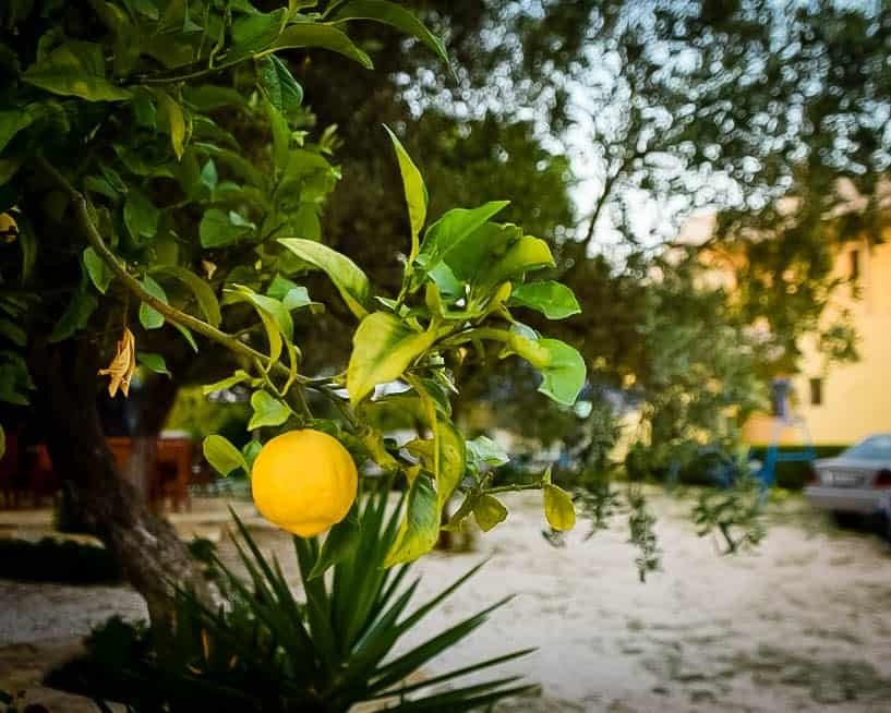 Albania - Ksamil - Lemon Tree