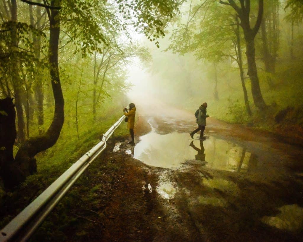 Bulgaria - Buzludzha - Trees in Fog