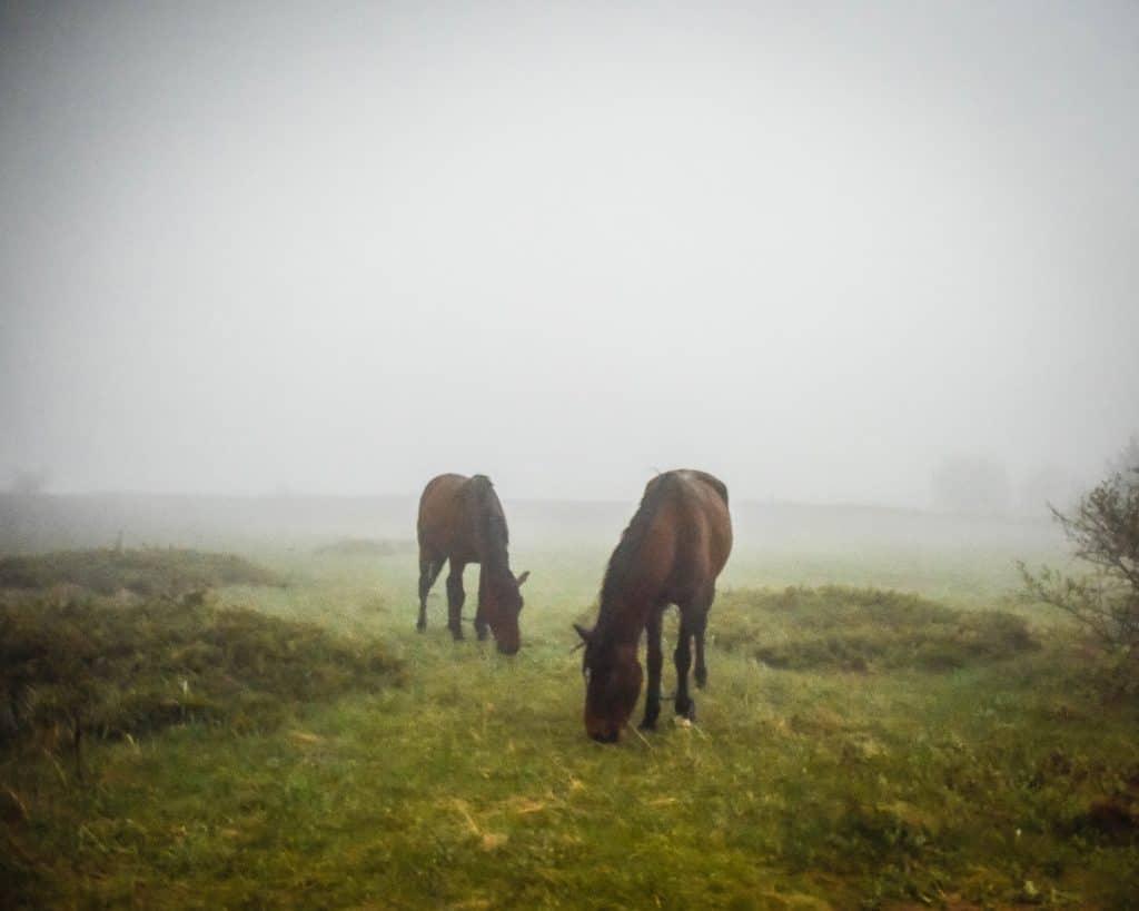 Bulgaria - Buzludzha - Horses