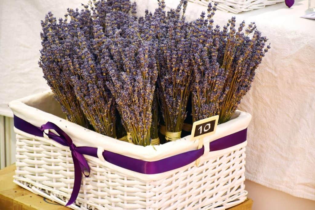 Croatia - Lavender - Pixabay