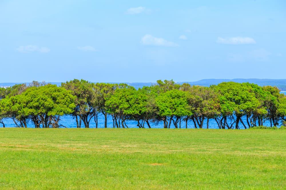 Croatia - Brijuni Islands National Park - shutterstock_1095166010