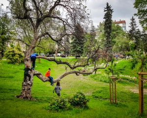 Bulgaria - Sofia - Children Playing in a tree