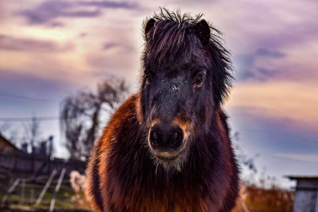 Romania - Horse