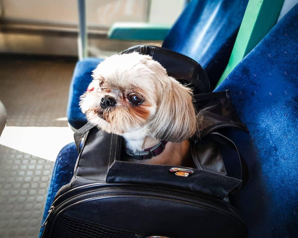 Bulgaria - Sofia to Burgas - Lucy on Train