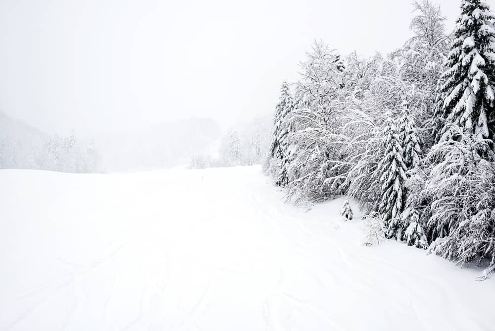 Kolasin - Montenegro - Snow covered ski slope and trees