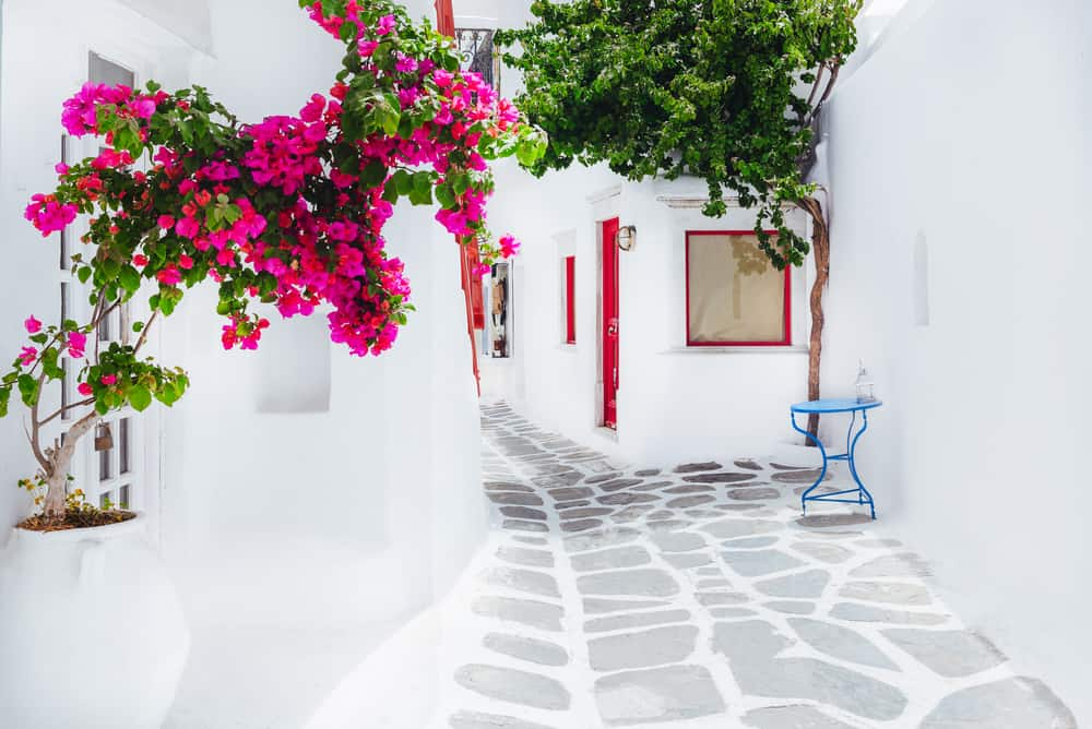 Mykonos - White houses with pink fowers and red window shutters