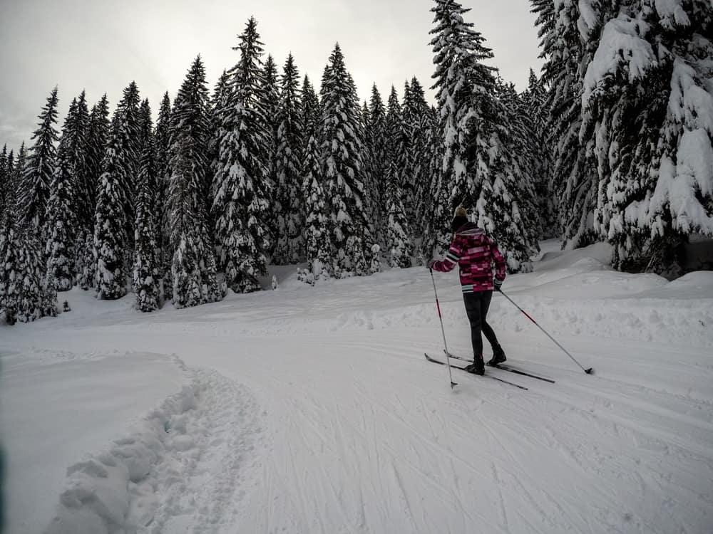 Slovenia - Pokljuka - Recreation at Pokljuka. Some cross country skiing under huge spurces and lot of snow.