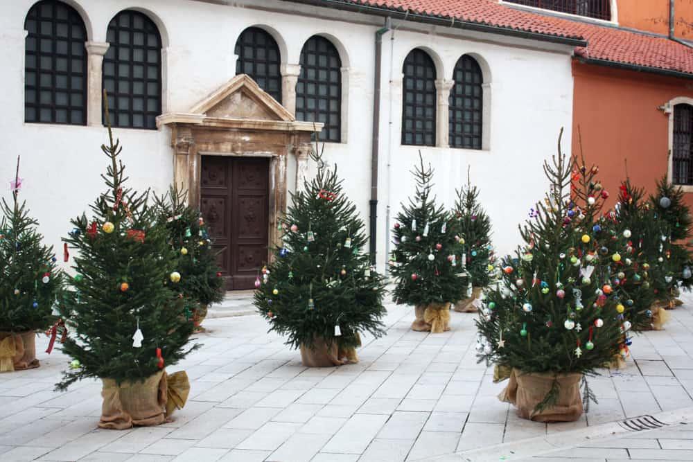 Croatia - Zadar - Christmas trees near St. Simon's Church. Zadar. Croatia.
