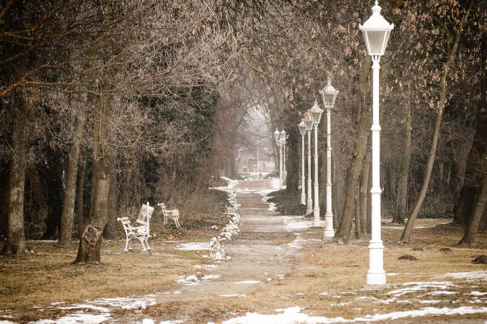 Serbia - Subotica -Path through the park in Palic, Serbia.