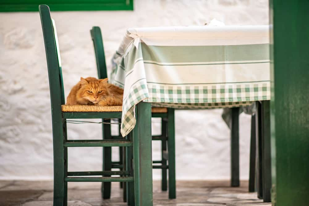 Greece - Hydra - A beautiful wild, stray cat resting on a green wicker chair at a cafe or taverna, on the enchanting Greek Island of Hydra.