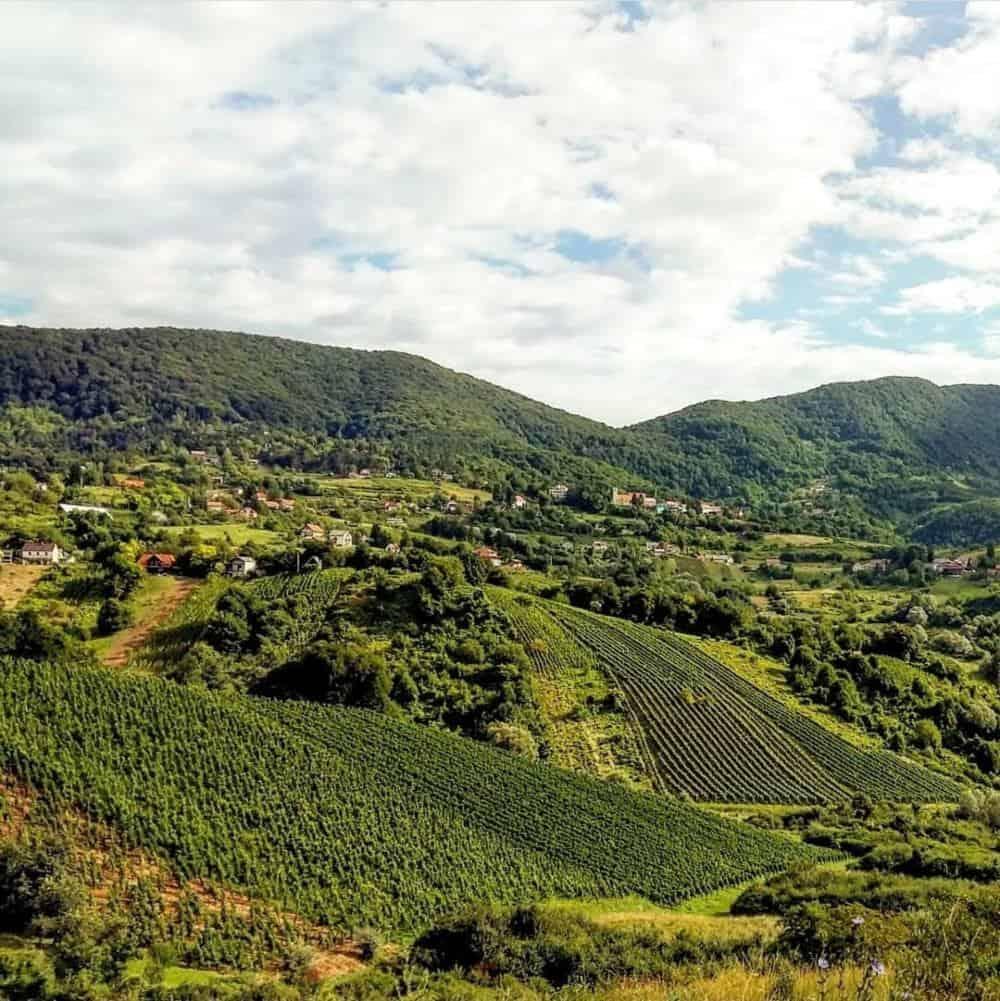 Croatia - Griffin Winery