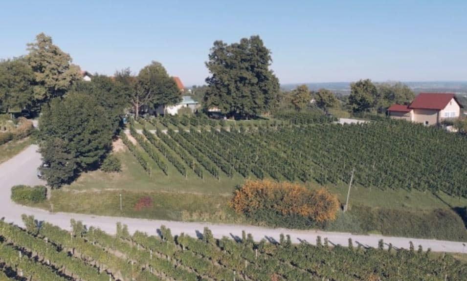 Croatia - Korak - Wineries near Zagreb