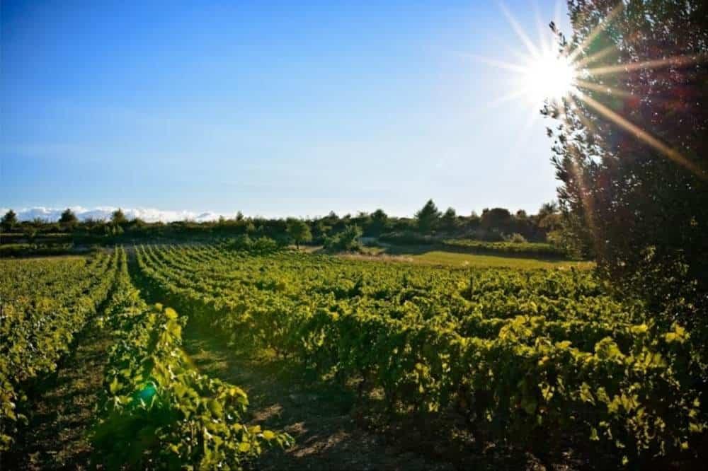 Croatia - Vina Sladić Winery