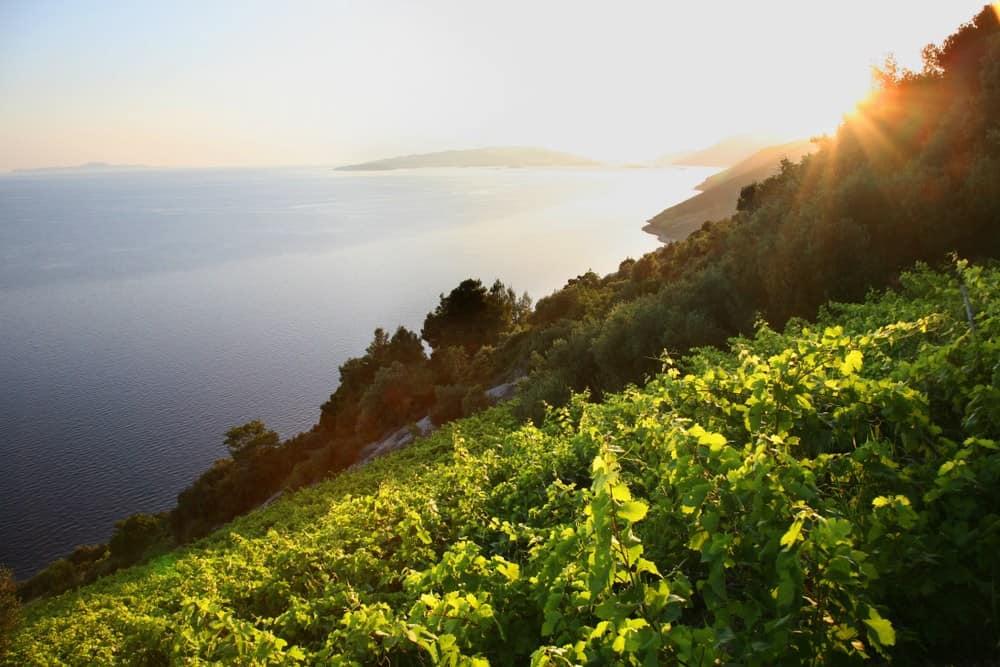 Croatia - Dingac vineyard position, peninsula of Peljesac, Dalmatia, Croatia