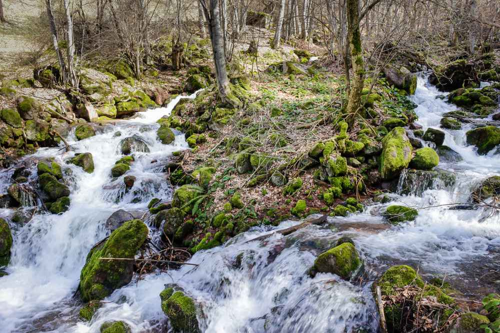 Serbia - Beautiful mountain river and green moss in the forest on the road to Piljski waterfall