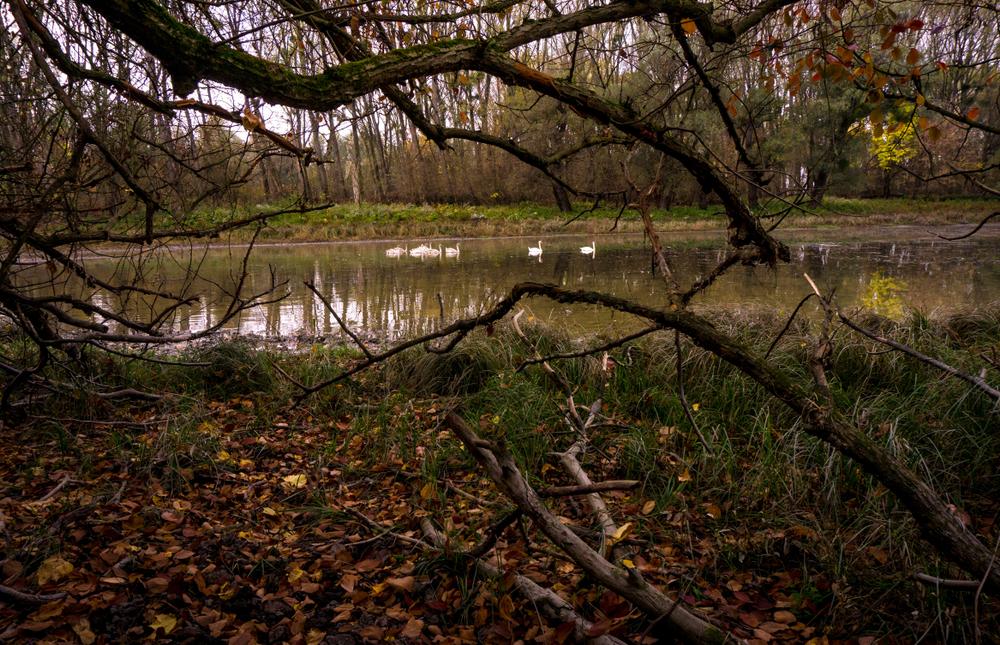 Serbia - Landscape in Forrest in Gornje podunavlje Serbia near river Donau lakes that left behind of the flood